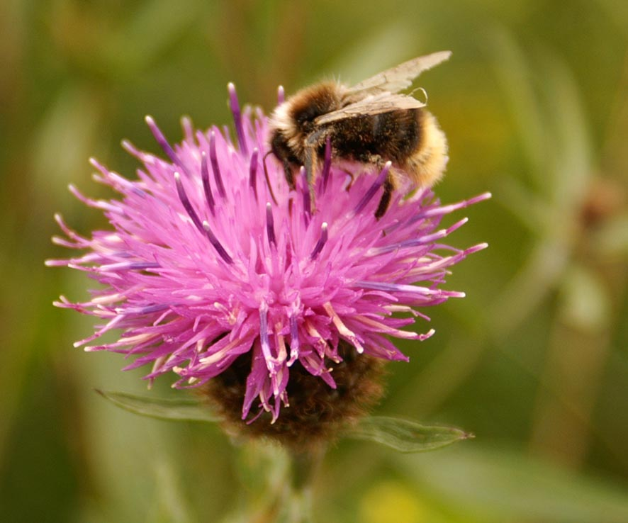 Wildflowers will attract bees and butterflies to your garden