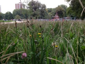 Late September look - our Wildflower Turf at Shepherds Bush Common