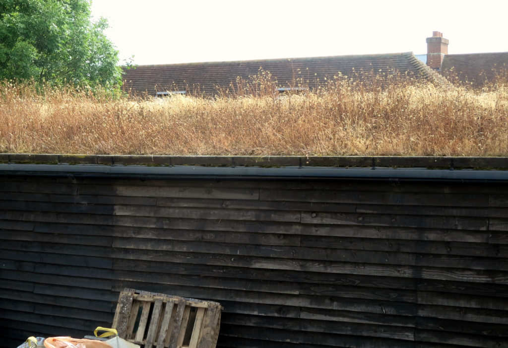 Wildflower Green Roof Browning Off