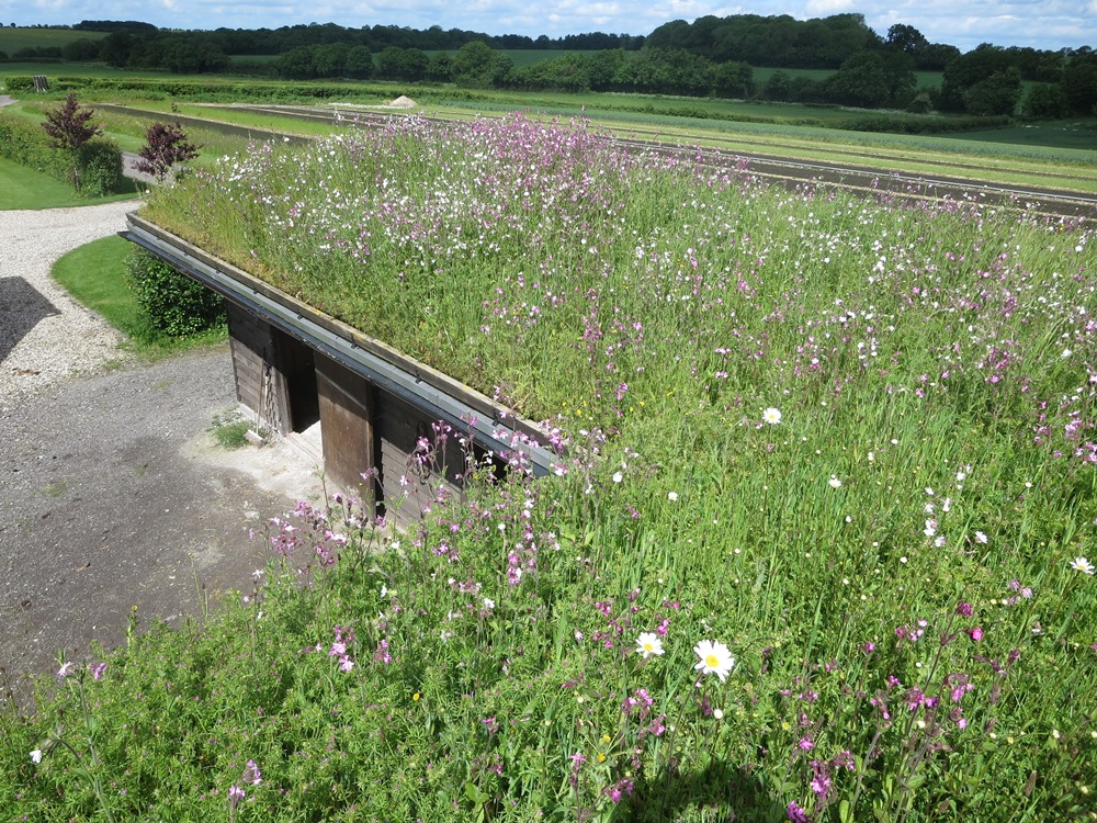 A wildflower Green roof in Spring