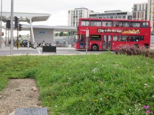 Recently established Wildflower Turf at Stratford (station behind)